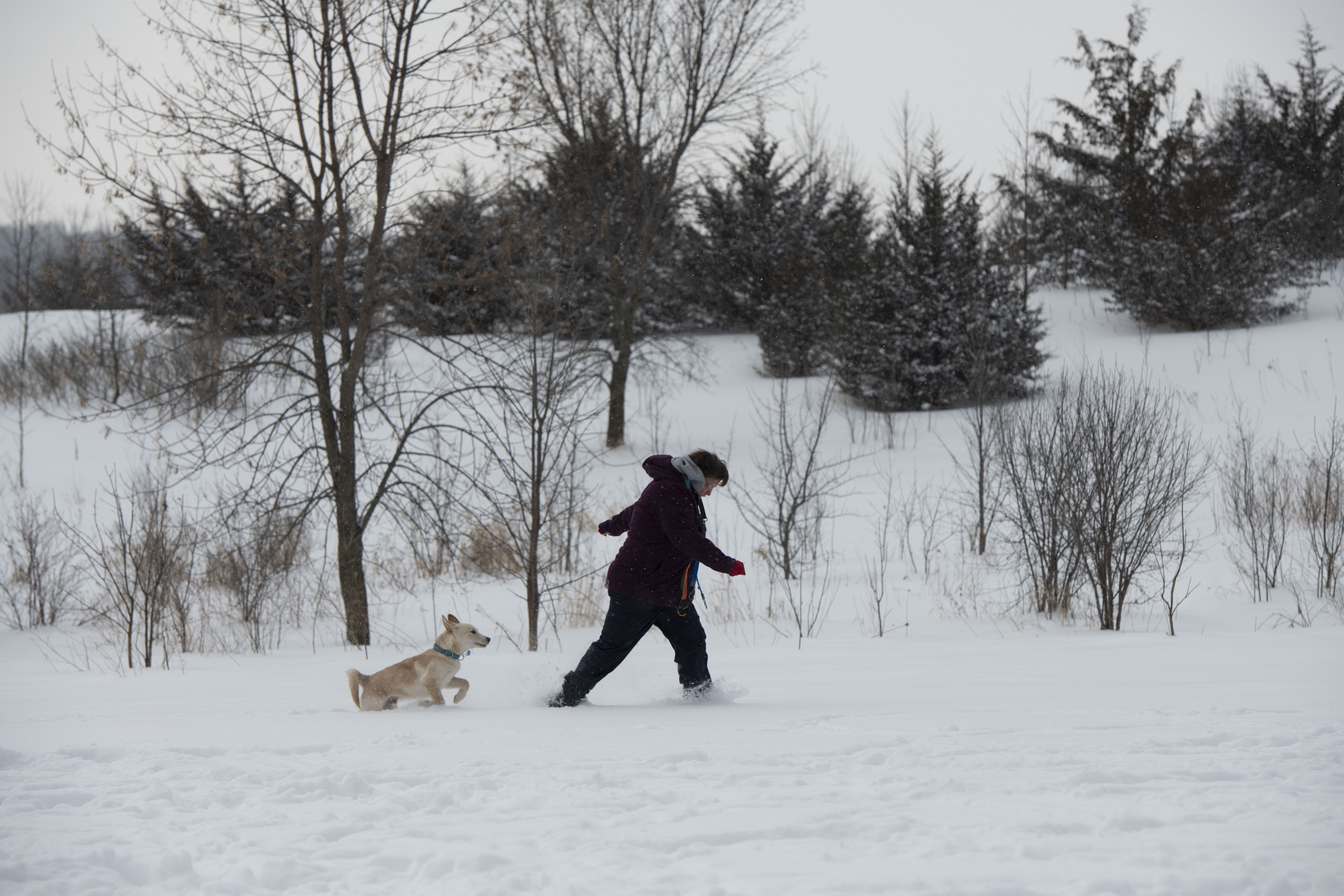 dog and owner running in snow